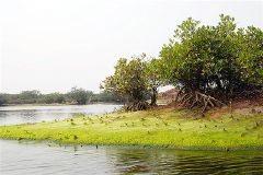 Du lịch sinh thái ở Xuân Thủy
