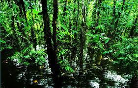 7 Đối Tác Đăng Ký Đầu Tư Vào Vườn Quốc Gia U Minh Hạ