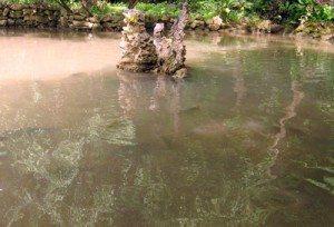 Phát hiện suối 'cá thần' thứ hai ở Thanh Hóa