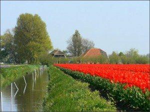 Alkmaar – Điểm du lịch thú vị khi đến Hà Lan