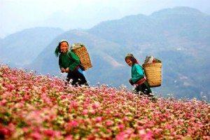 Khởi sắc du lịch Hà Giang