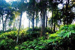 Khám phá vẻ đẹp rừng già Ý Tý, Lào Cai