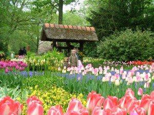 Da lat chuan bi cho festival hoa 2012