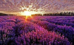 Những thiên đường hoa đẹp mê đắm