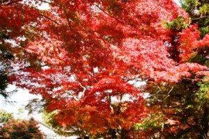 Cố đô KYOTO – Điểm đến mùa thu