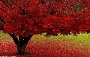 """Lung linh """"mùa thu ấm"""" nước Anh"""
