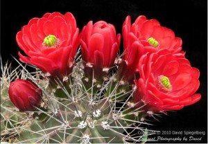 Những nơi ngắm hoa mùa xuân đẹp nhất thế giới