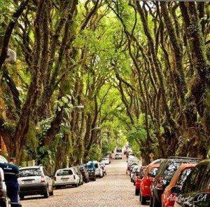 Chiêm ngưỡng con đường cổ tích đẹp nao lòng ở Brazil