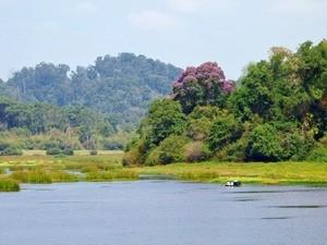 Sẽ tổ chức Festival rừng đầu tiên vào năm 2013
