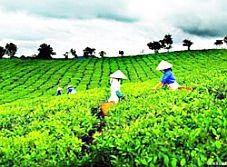 Liên hoan Trà quốc tế lần thứ nhất – Thái Nguyên 2011