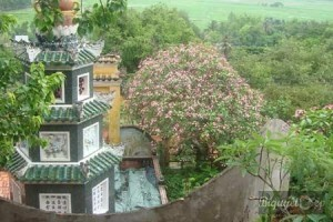 Vãn cảnh chùa Hang