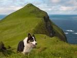 Quan dao Faroe