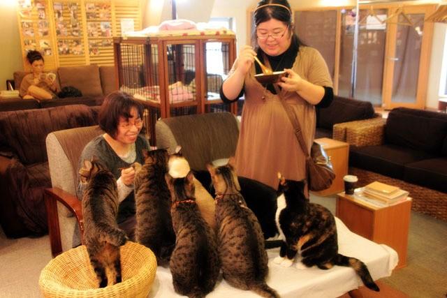 Uong cafe tai Nekorobi
