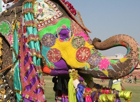 Le hoi voi Jaipur