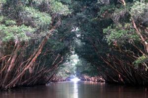 Tràm Chim, thiên đường mùa nước nổi