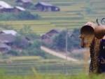 le hoi ruong bac thang (1)