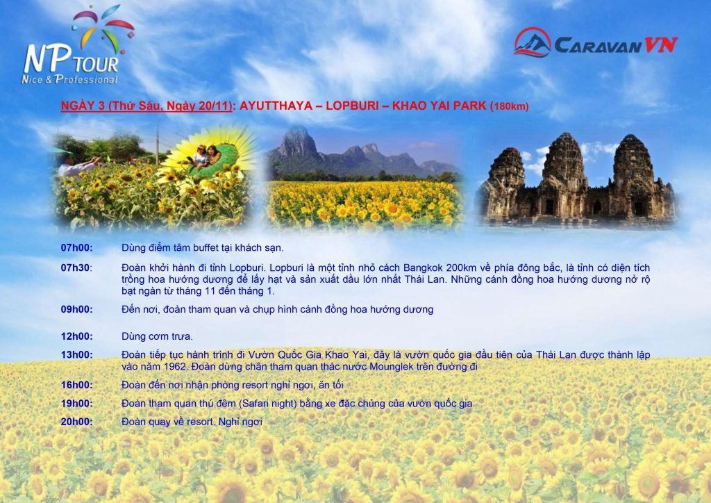 CRV SUNFLOWER-4